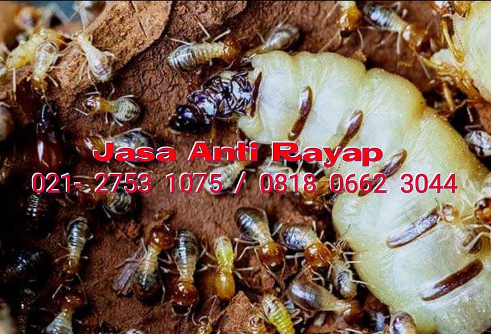 Jasa Anti Rayap di Kembangan Jakarta Barat