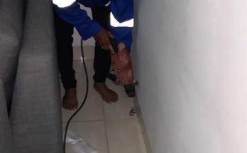Jasa Anti Rayap di Batam