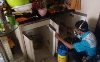 Cara Basmi rayap di Rumah