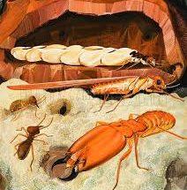jasa-anti-rayap-dan basmi-serangga